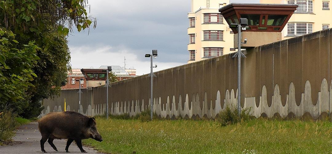 Großstadt-Wildnis-Sven-Meurs-08