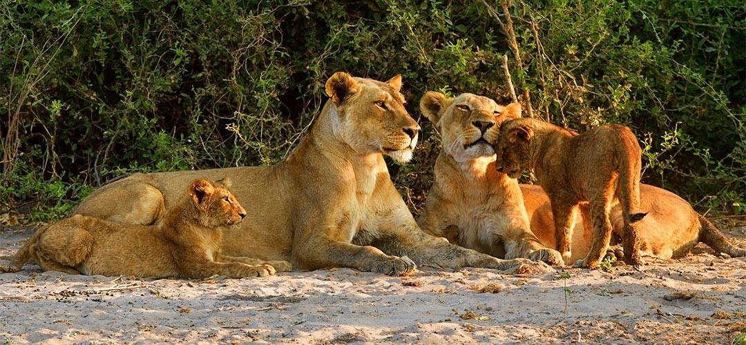 Namibia-Botswana-Sbampato-11