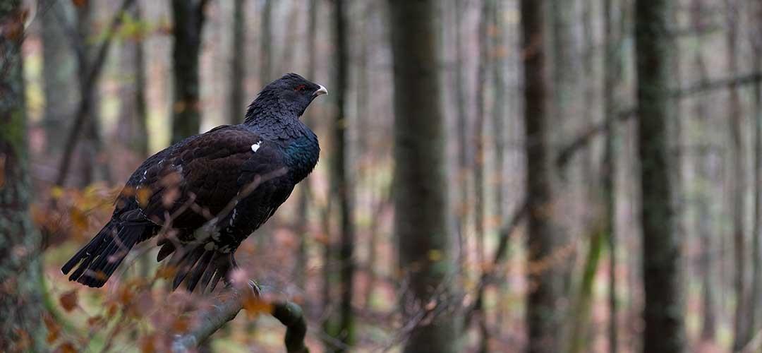 Natur-Tierfotografie_G3