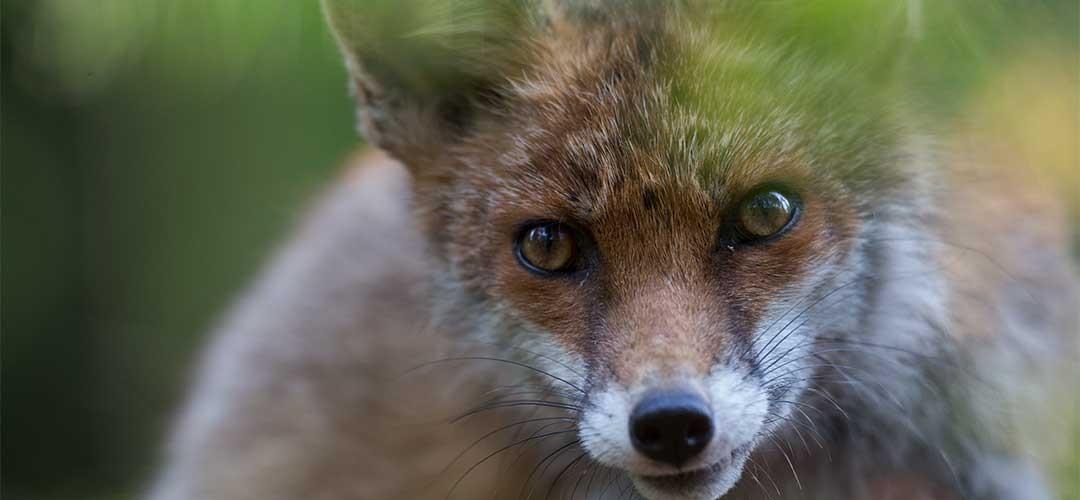 Natur-Tierfotografie_G5