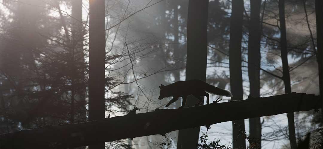 Natur-Tierfotografie_G7