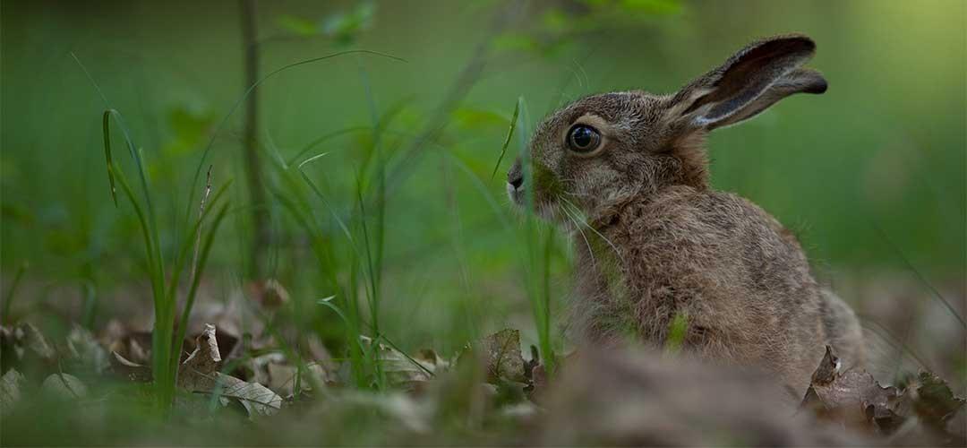 Natur-Tierfotografie_G8