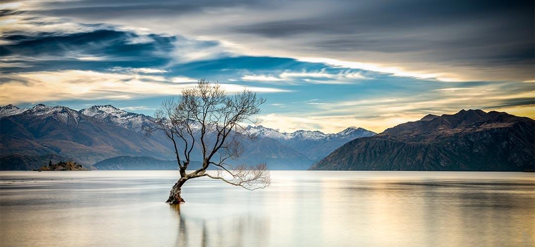 Neuseeland-Zwerger-Schoner-04