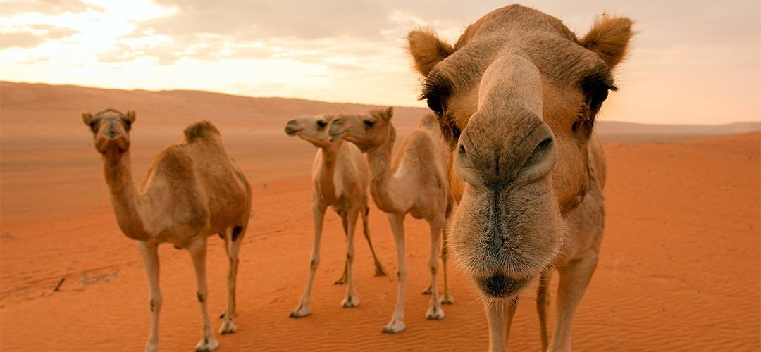 Oman-Emirate-Fiebig-08
