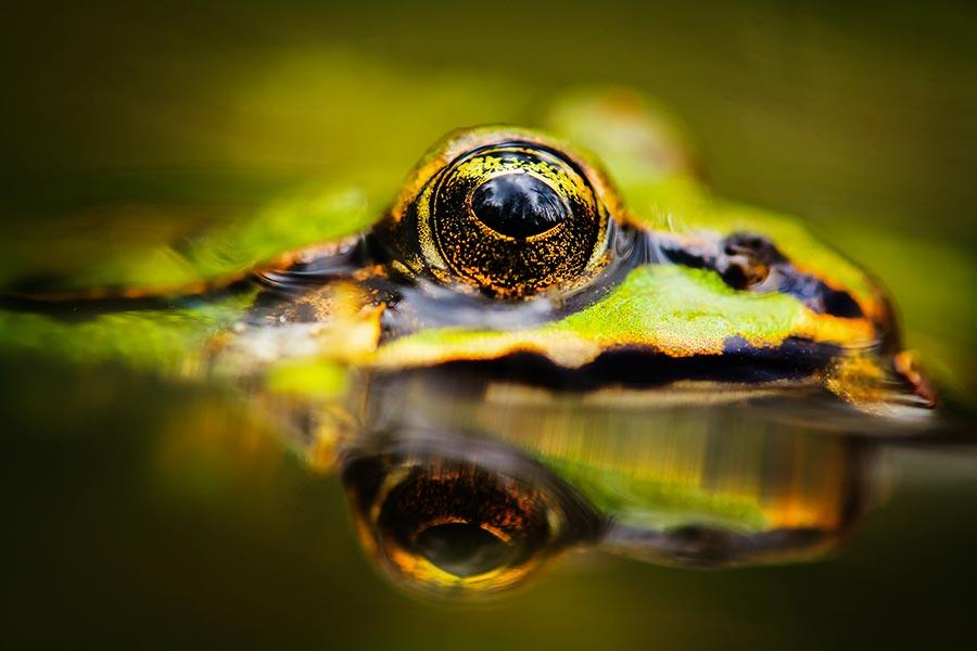 Unsere wilde Heimat_Frosch