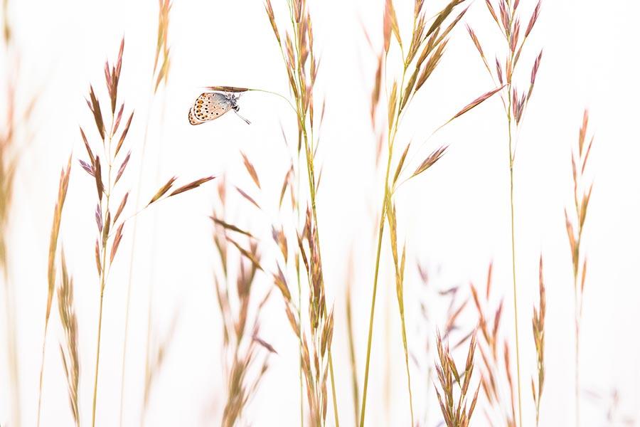 Unsere wilde Heimat_Schmetterling