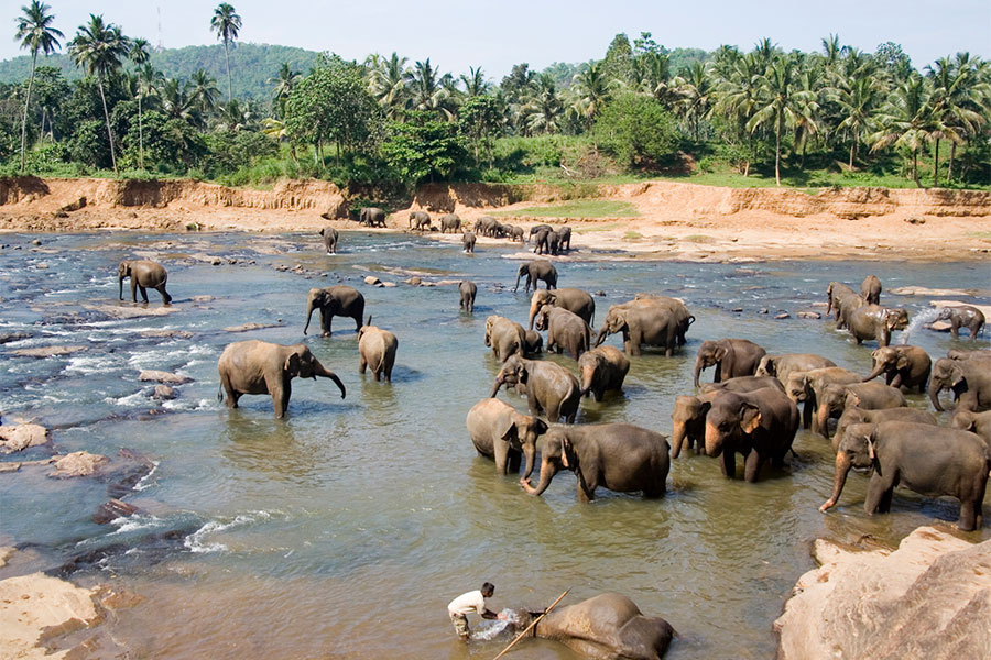 World Insight_Reise_SriLanka_9x6_4