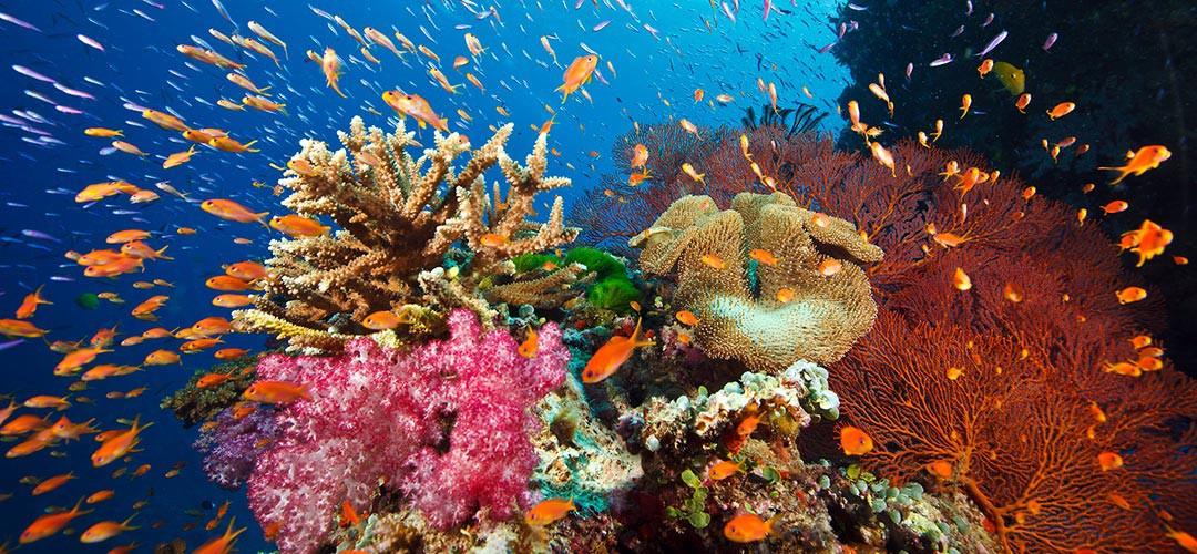korallenriff_fiji